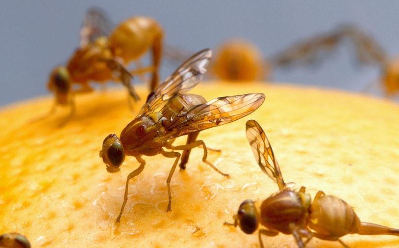 Håll rent – håll flugorna borta